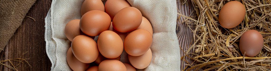 Toptan Organik Gezen Tavuk Yumurtası
